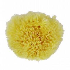 Natural sponge body